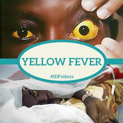 Yellow fever bleeding