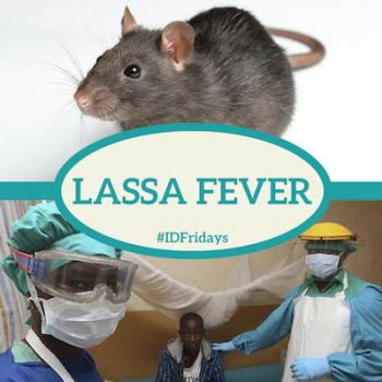 #IDFridays Week 15: Lassa Fever: https://www.drasatrust.org/lassa-fever/