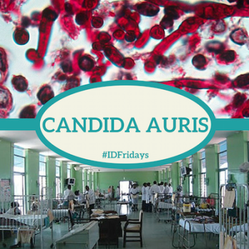 #IDFridays Week 22: Candida Auris: https://www.drasatrust.org/candida/