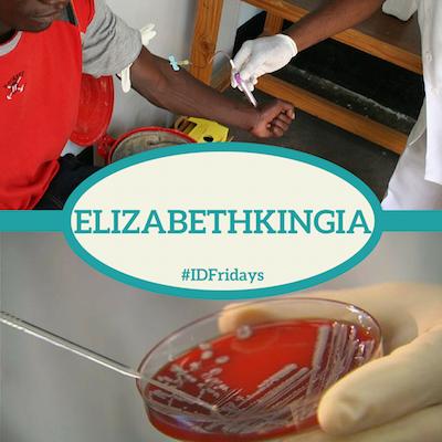 #IDFridays: Elizabethkingia