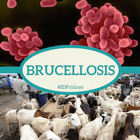 Brucellosis 200px 3