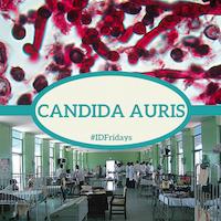 Infectious Disease Fridays Idfridays Week 22 Candida Auris