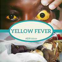 Yellow Fever 200px