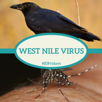 #IDFridays Week 48: West Nile Virus: https://www.drasatrust.org/wnv/